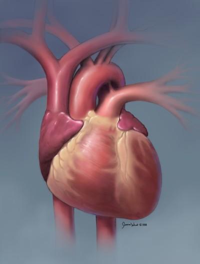 forma inimii