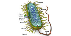 Oxidul Nitric Creste Rezistenta Bacteriilor la Antibiotice
