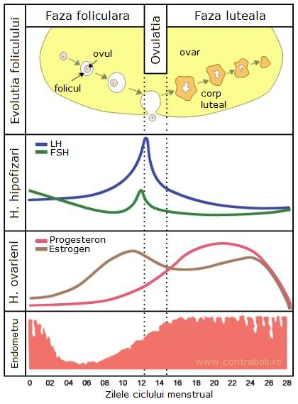 ciclul-menstrual-si-ovulatia