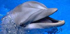 Delfinii Ajuta Sanatatea Oamenilor