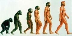 Ce Ne Deosebeste De Cimpanzei?