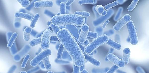 lactobacillus gg pierdere în greutate